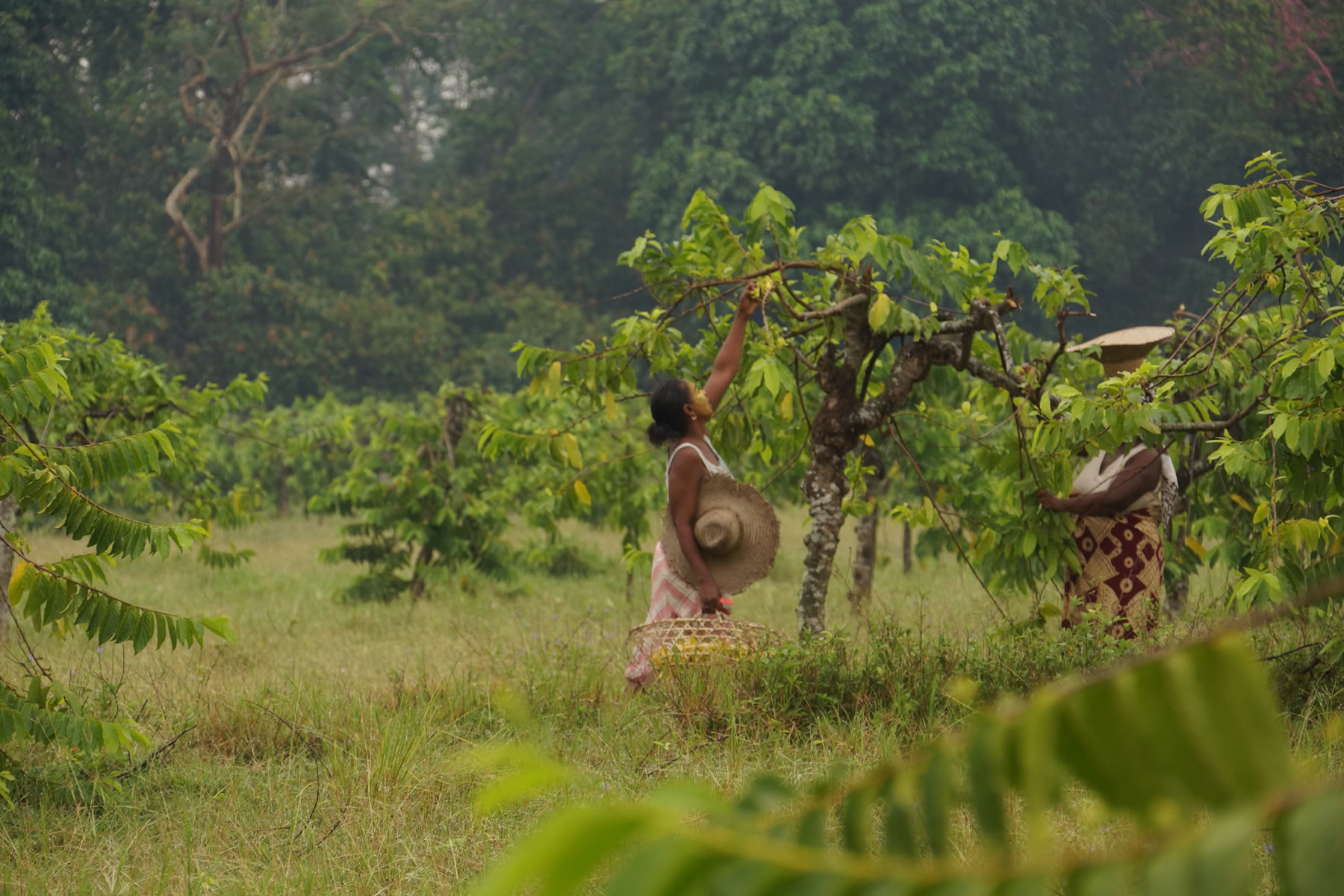 Makira Forest Protection Project in Madagascar