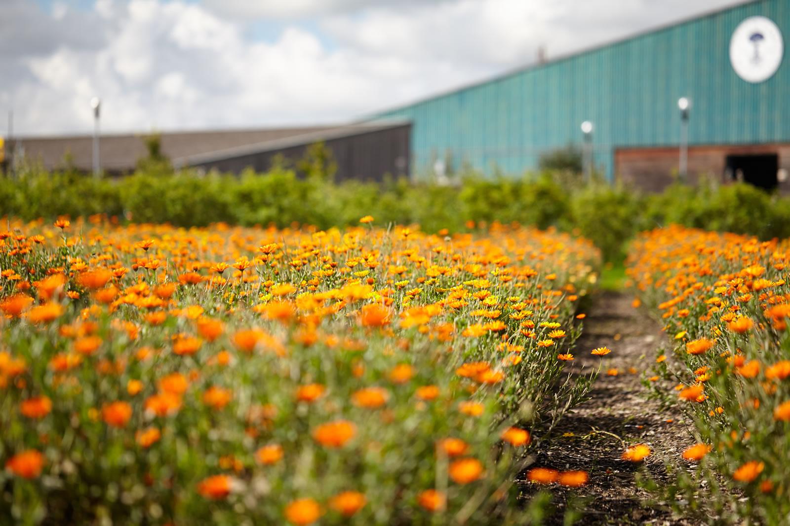 Neals's Yard Remedies HQ, Peacemarsh, Dorset